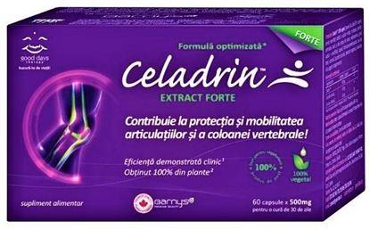 Imagine CELADRIN EXTRACT FORTE X 60 CAPSULE BARNYS